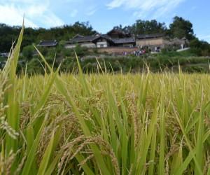Gyeongju: mejor época para visitar
