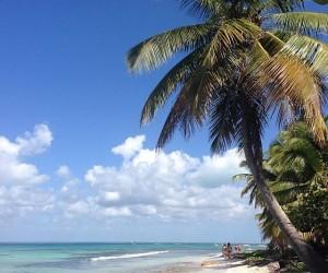 Isla Saona: mejor época para visitar