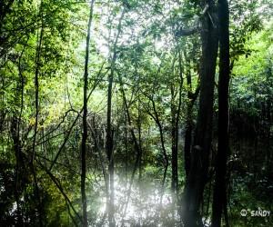 Oriente (Amazonia): mejor época para visitar