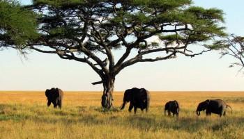 Parque Nacional del Alto Níger