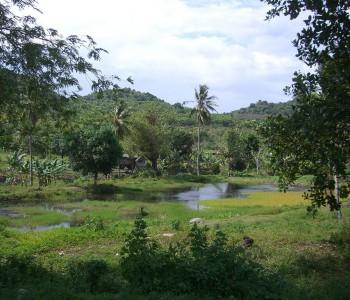Sulawesi (Célebes)
